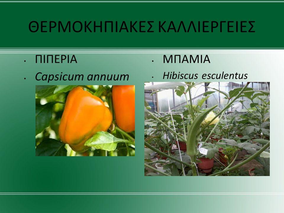 Προγραμματίσαμε το σύστημα άρδευσης ώστε μαζί με το απαραίτητο για τα φυτά νερό να διοχετεύει ένα μείγμα λιπασμάτων και ιχνοστοιχείων,το οποίο φτιάξαμε στο εργαστήριο σε αναλογίες τέτοιες, ώστε το τελικό προϊόν να καλύπτει πλήρως τις ανάγκες θρέψης των φυτών.