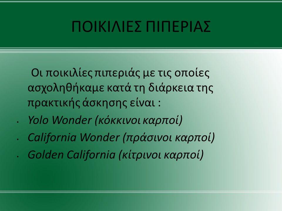 ΠΟΙΚΙΛΙΕΣ ΠΙΠΕΡΙΑΣ Οι ποικιλίες πιπεριάς με τις οποίες ασχοληθήκαμε κατά τη διάρκεια της πρακτικής άσκησης είναι : Yolo Wonder (κόκκινοι καρποί) California Wonder (πράσινοι καρποί) Golden California (κίτρινοι καρποί)