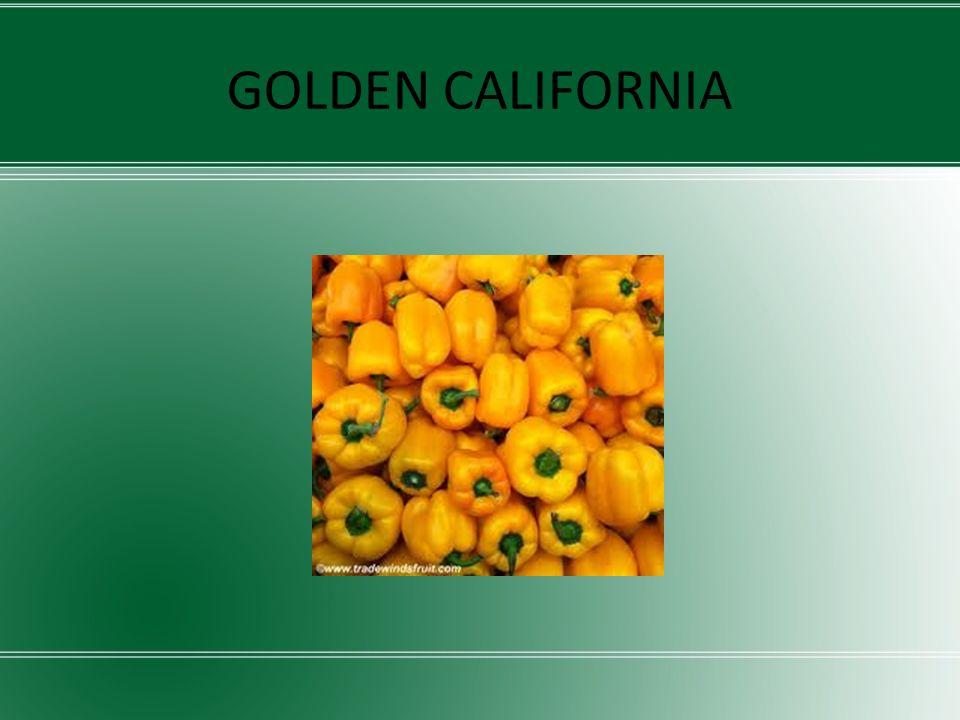 ΠΟΙΚΙΛΙΕΣ ΜΠΑΜΙΑΣ Οι ποικιλίες μπάμιας που καλλιεργήσαμε στο θερμοκήπιο είναι: Clemson Μπογιατίου