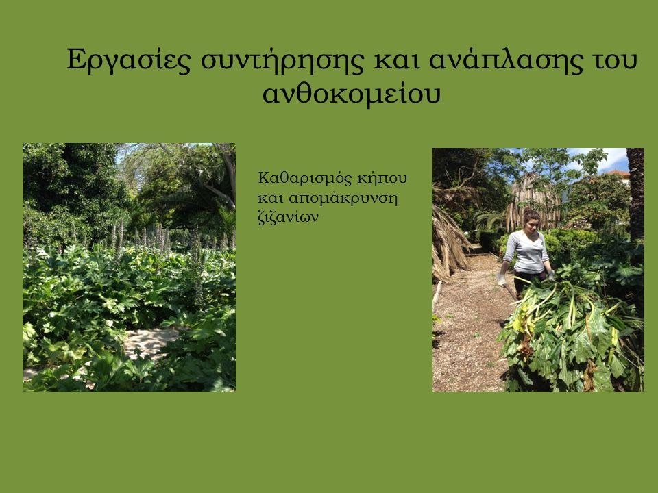 Εργασίες συντήρησης και ανάπλασης του ανθοκομείου Καθαρισμός κήπου και απομάκρυνση ζιζανίων