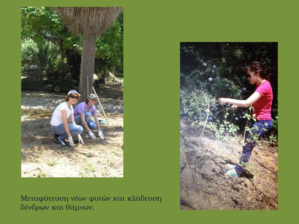 Μεταφύτευση νέων φυτών και κλάδευση δένδρων και θάμνων.