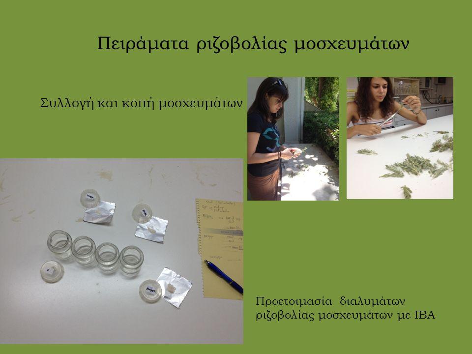Συλλογή και κοπή μοσχευμάτων Πειράματα ριζοβολίας μοσχευμάτων Προετοιμασία διαλυμάτων ριζοβολίας μοσχευμάτων με ΙΒΑ