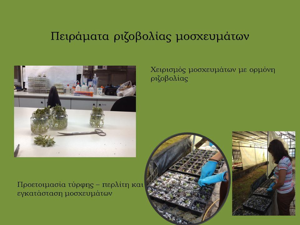 Πειράματα βλαστικότητας σπόρων Καθαρισμός σπόρων Προετοιμασία τρυβλίων με υπόστρωμα MS.