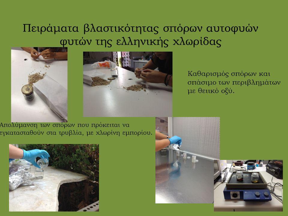 Πειράματα βλαστικότητας σπόρων αυτοφυών φυτών της ελληνικής χλωρίδας Καθαρισμός σπόρων και σπάσιμο των περιβλημάτων με θειικό οξύ. Απολύμανση των σπόρ
