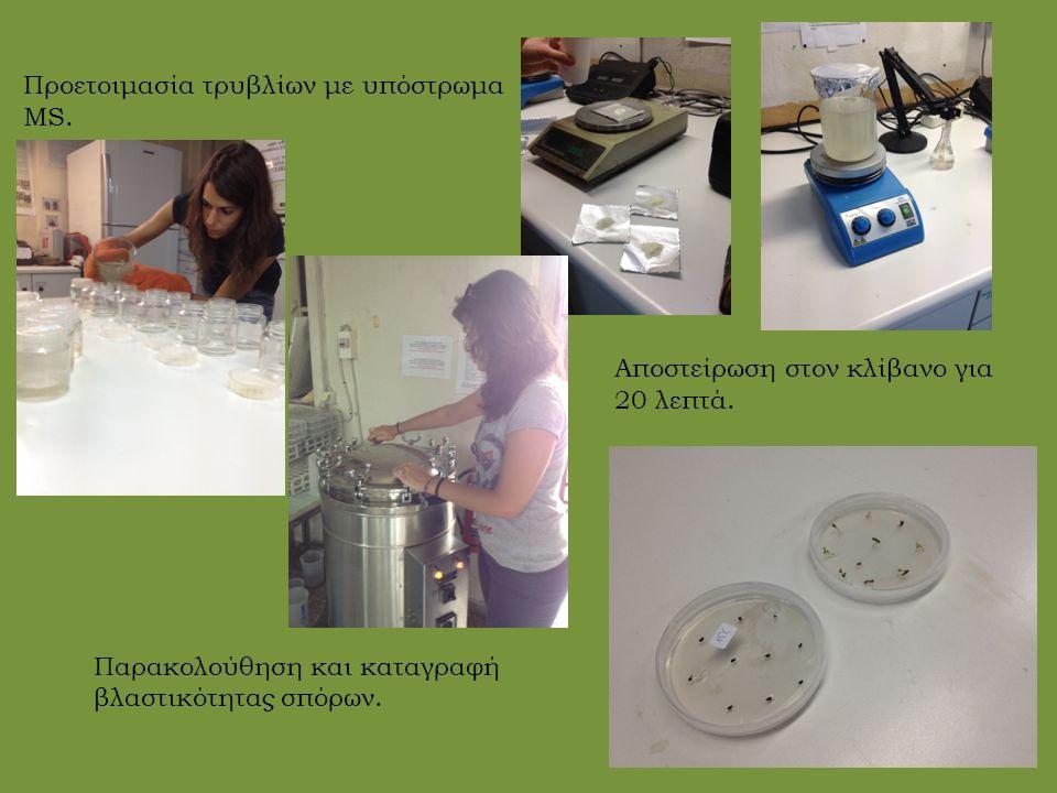 Προετοιμασία τρυβλίων με υπόστρωμα MS. Παρακολούθηση και καταγραφή βλαστικότητας σπόρων.