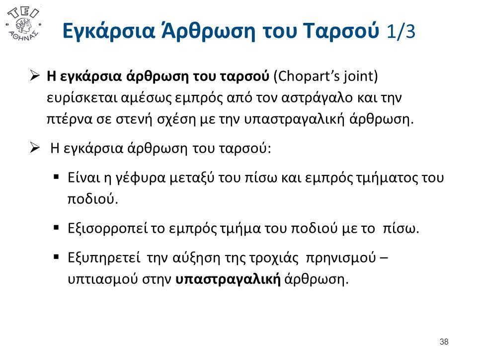 Εγκάρσια Άρθρωση του Ταρσού 1/3  Η εγκάρσια άρθρωση του ταρσού (Chopart's joint) ευρίσκεται αμέσως εμπρός από τον αστράγαλο και την πτέρνα σε στενή σ