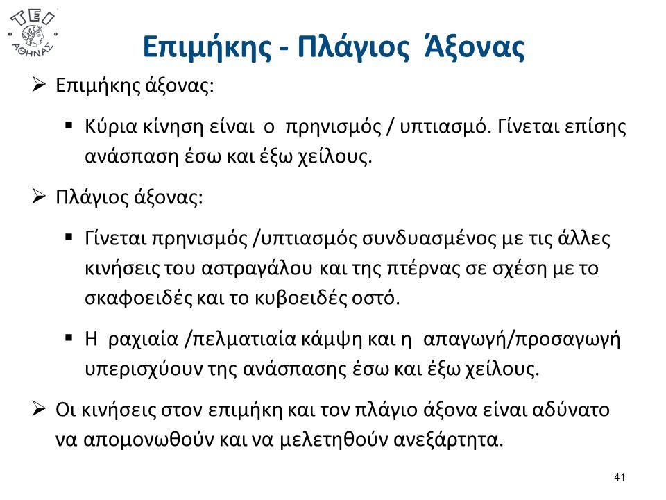Επιμήκης - Πλάγιος Άξονας  Επιμήκης άξονας:  Κύρια κίνηση είναι ο πρηνισμός / υπτιασμό. Γίνεται επίσης ανάσπαση έσω και έξω χείλους.  Πλάγιος άξονα