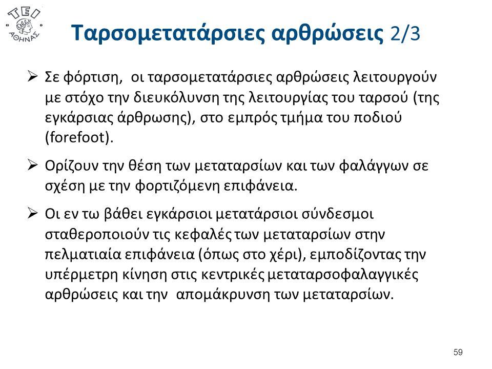 Ταρσομετατάρσιες αρθρώσεις 2/3  Σε φόρτιση, οι ταρσομετατάρσιες αρθρώσεις λειτουργούν με στόχο την διευκόλυνση της λειτουργίας του ταρσού (της εγκάρσ