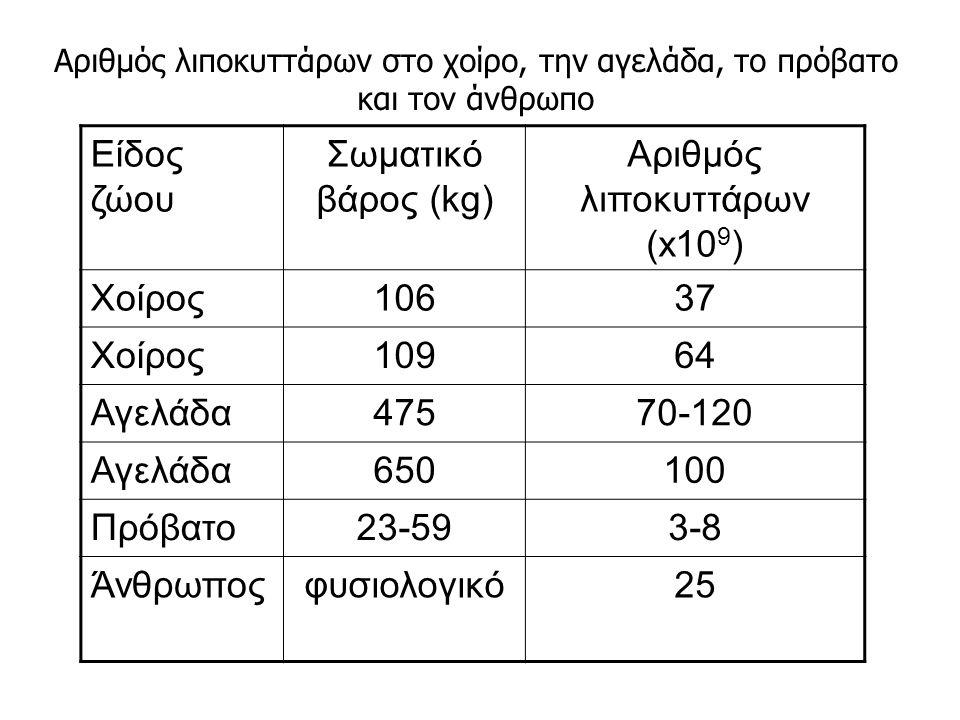 Είδος ζώου Σωματικό βάρος (kg) Αριθμός λιποκυττάρων (x10 9 ) Χοίρος10637 Χοίρος10964 Αγελάδα47570-120 Αγελάδα650100 Πρόβατο23-593-8 Άνθρωποςφυσιολογικό25 Αριθμός λιποκυττάρων στο χοίρο, την αγελάδα, το πρόβατο και τον άνθρωπο