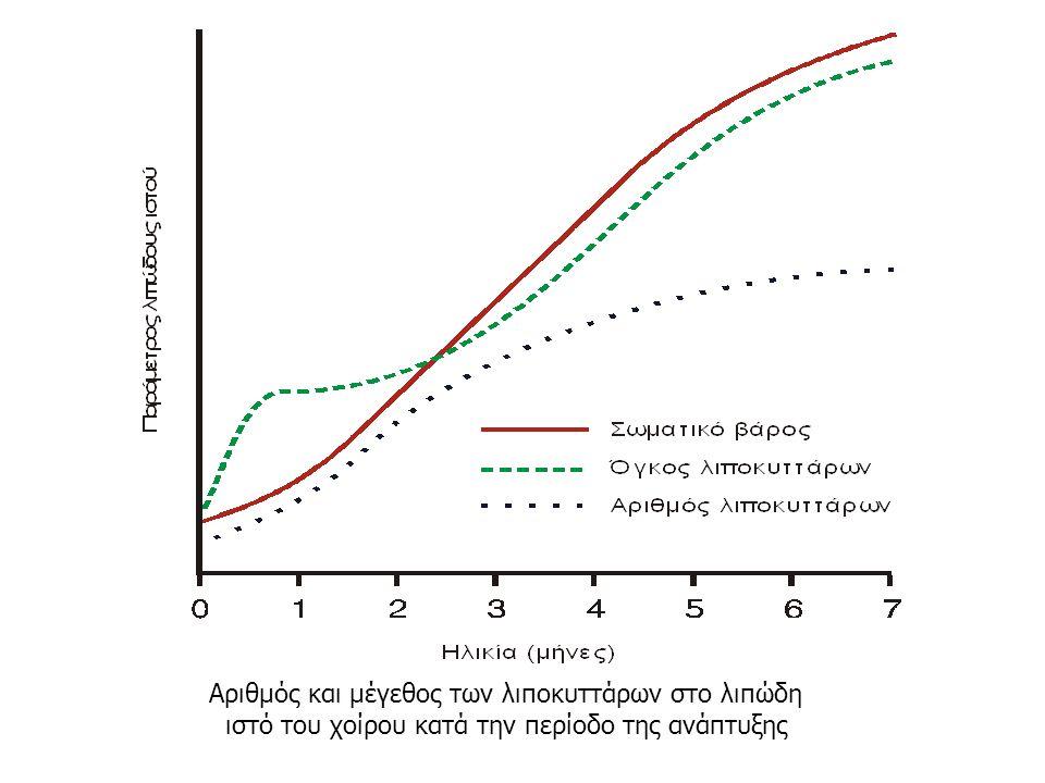 Αριθμός και μέγεθος των λιποκυττάρων στο λιπώδη ιστό του χοίρου κατά την περίοδο της ανάπτυξης