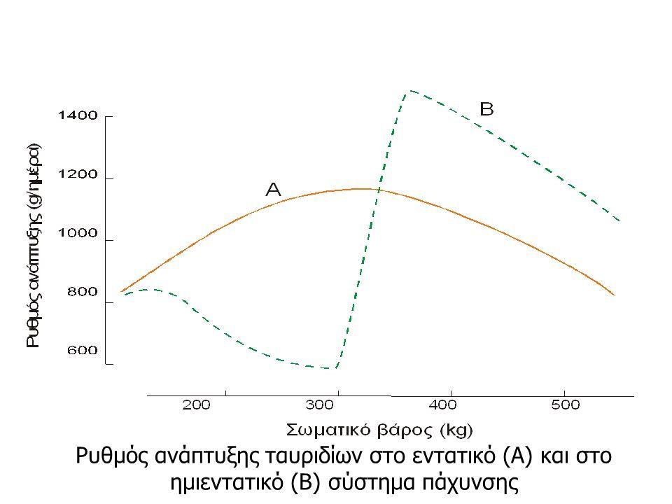 Ρυθμός ανάπτυξης ταυριδίων στο εντατικό (Α) και στο ημιεντατικό (Β) σύστημα πάχυνσης