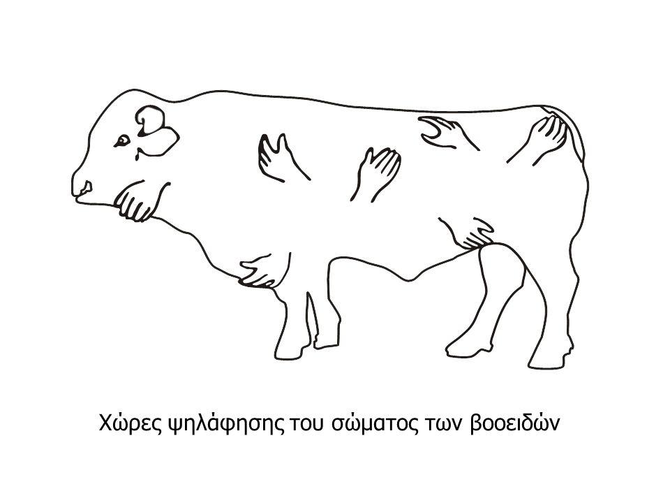 Χώρες ψηλάφησης του σώματος των βοοειδών