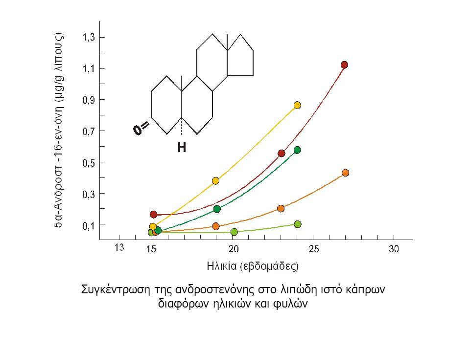Συγκέντρωση της ανδροστενόνης στο λιπώδη ιστό κάπρων διαφόρων ηλικιών και φυλών