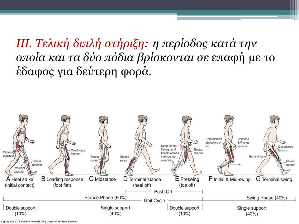 III. Τελική διπλή στήριξη: η περίοδος κατά την οποία και τα δύο πόδια βρίσκονται σε επαφή με το έδαφος για δεύτερη φορά.