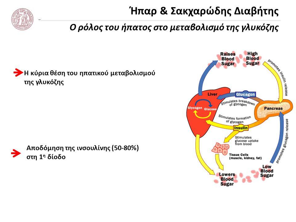 Ήπαρ & Σακχαρώδης Διαβήτης Ο ρόλος του ήπατος στο μεταβολισμό της γλυκόζης Η κύρια θέση του ηπατικού μεταβολισμού της γλυκόζης Αποδόμηση της ινσουλίνης (50-80%) στη 1 η δίοδο