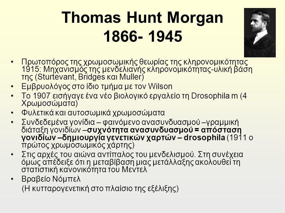 Thomas Hunt Morgan 1866- 1945 Πρωτοπόρος της χρωμοσωμικής θεωρίας της κληρονομικότητας 1915: Μηχανισμός της μενδελιανής κληρονομικότητας-υλική βάση της (Sturtevant, Bridges και Muller) Εμβρυολόγος στο ίδιο τμήμα με τον Wilson To 1907 εισήγαγε ένα νέο βιολογικό εργαλείο τη Drosophila m (4 Χρωμοσώματα) Φυλετικά και αυτοσωμικά χρωμοσώματα Συνδεδεμένα γονίδια – φαινόμενο ανασυνδυασμού –γραμμική διάταξη γονιδίων –συχνότητα ανασυνδυασμού = απόσταση γονιδίων –δημιουργία γενετικών χαρτών – drosophila (1911 ο πρώτος χρωμοσωμικός χάρτης) Στις αρχές του αιώνα αντίπαλος του μενδελισμού.