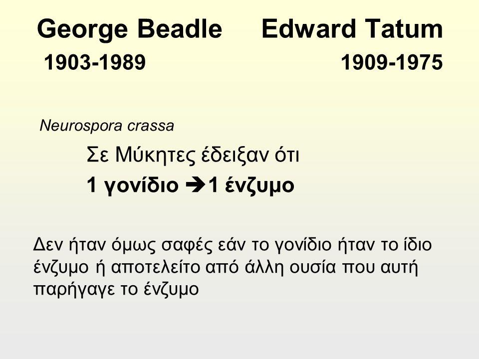 George Beadle Edward Tatum 1903-1989 1909-1975 Neurospora crassa Σε Μύκητες έδειξαν ότι 1 γονίδιο  1 ένζυμο Δεν ήταν όμως σαφές εάν το γονίδιο ήταν το ίδιο ένζυμο ή αποτελείτο από άλλη ουσία που αυτή παρήγαγε το ένζυμο