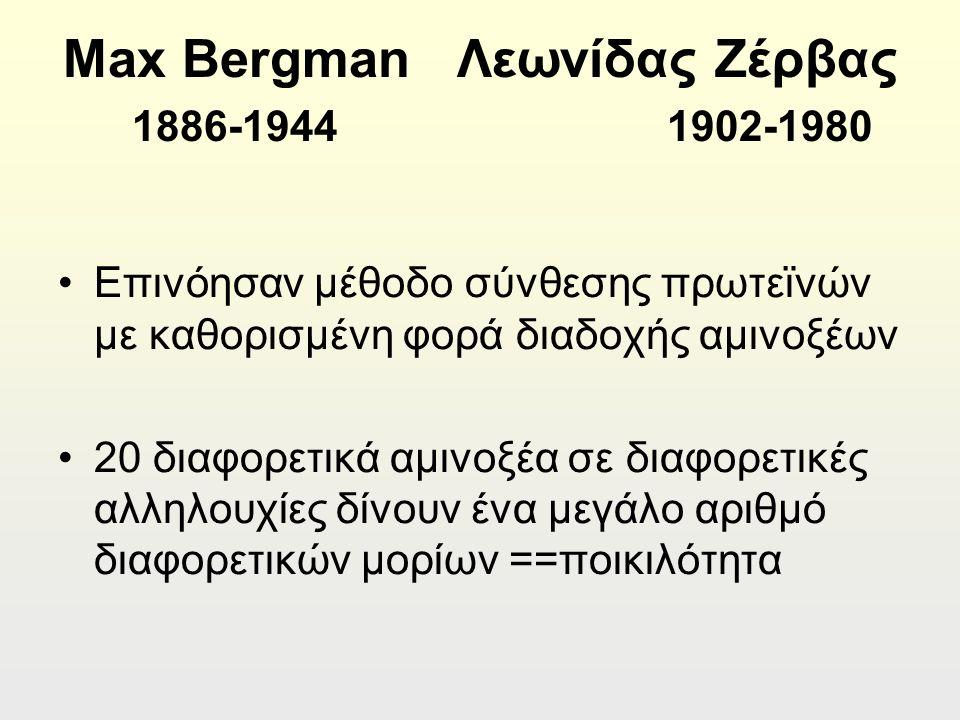 Max Bergman Λεωνίδας Ζέρβας 1886-1944 1902-1980 Επινόησαν μέθοδο σύνθεσης πρωτεϊνών με καθορισμένη φορά διαδοχής αμινοξέων 20 διαφορετικά αμινοξέα σε διαφορετικές αλληλουχίες δίνουν ένα μεγάλο αριθμό διαφορετικών μορίων ==ποικιλότητα