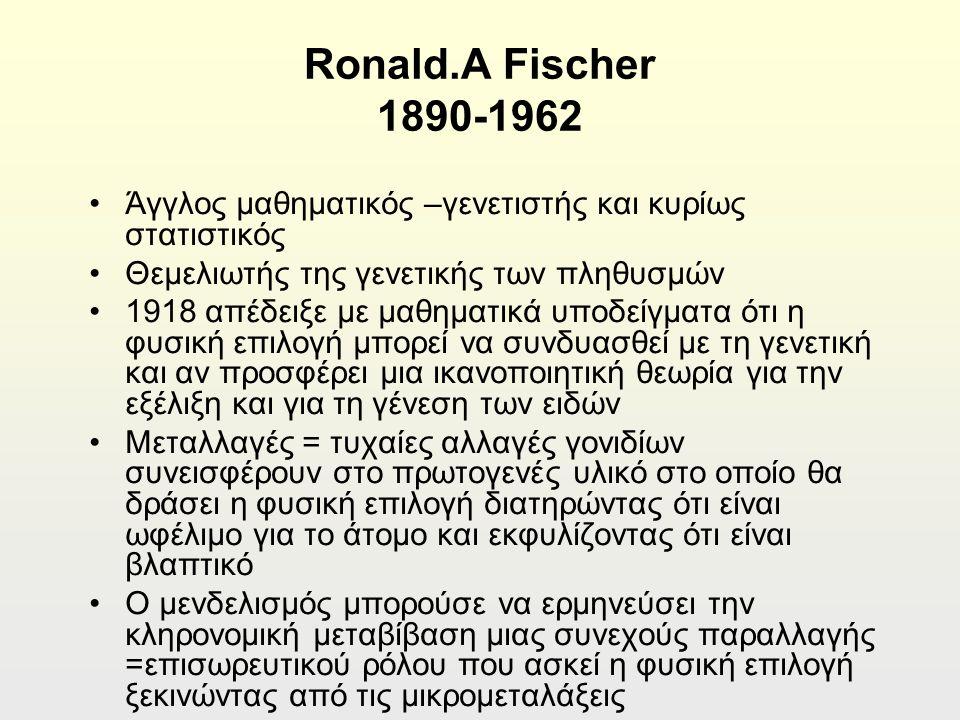 Ronald.A Fischer 1890-1962 Άγγλος μαθηματικός –γενετιστής και κυρίως στατιστικός Θεμελιωτής της γενετικής των πληθυσμών 1918 απέδειξε με μαθηματικά υποδείγματα ότι η φυσική επιλογή μπορεί να συνδυασθεί με τη γενετική και αν προσφέρει μια ικανοποιητική θεωρία για την εξέλιξη και για τη γένεση των ειδών Μεταλλαγές = τυχαίες αλλαγές γονιδίων συνεισφέρουν στο πρωτογενές υλικό στο οποίο θα δράσει η φυσική επιλογή διατηρώντας ότι είναι ωφέλιμο για το άτομο και εκφυλίζοντας ότι είναι βλαπτικό Ο μενδελισμός μπορούσε να ερμηνεύσει την κληρονομική μεταβίβαση μιας συνεχούς παραλλαγής =επισωρευτικού ρόλου που ασκεί η φυσική επιλογή ξεκινώντας από τις μικρομεταλάξεις