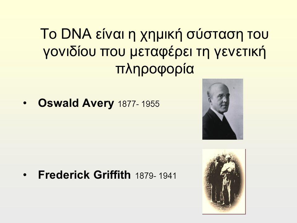Το DNA είναι η χημική σύσταση του γονιδίου που μεταφέρει τη γενετική πληροφορία Oswald Avery 1877- 1955 Frederick Griffith 1879- 1941