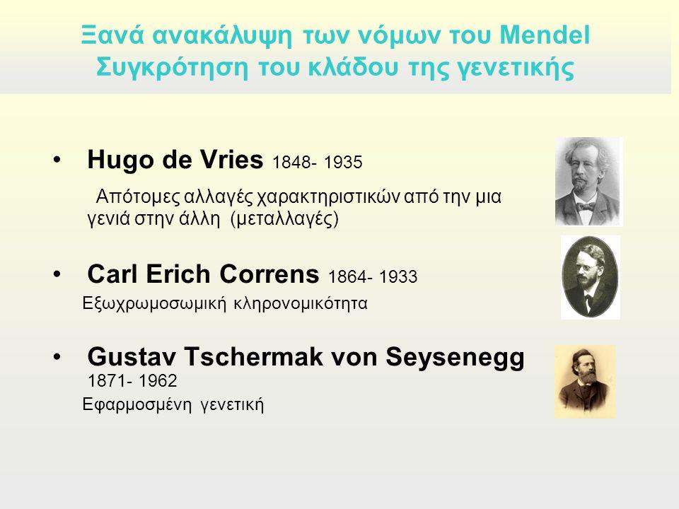 Hugo de Vries 1848- 1935 Απότομες αλλαγές χαρακτηριστικών από την μια γενιά στην άλλη (μεταλλαγές) Carl Erich Correns 1864- 1933 Εξωχρωμοσωμική κληρονομικότητα Gustav Tschermak von Seysenegg 1871- 1962 Εφαρμοσμένη γενετική Ξανά ανακάλυψη των νόμων του Mendel Συγκρότηση του κλάδου της γενετικής