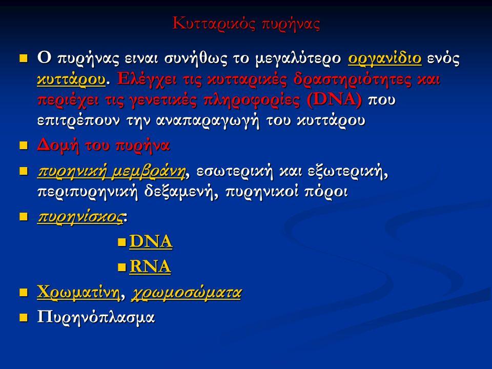Κυτταρικός πυρήνας Ο πυρήνας ειναι συνήθως το μεγαλύτερο οργανίδιο ενός κυττάρου. Ελέγχει τις κυτταρικές δραστηριότητες και περιέχει τις γενετικές πλη
