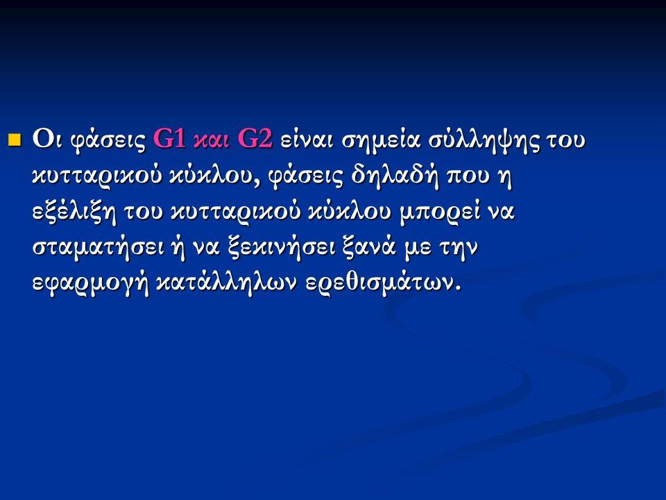 Οι φάσεις G1 και G2 είναι σημεία σύλληψης του κυτταρικού κύκλου, φάσεις δηλαδή που η εξέλιξη του κυτταρικού κύκλου μπορεί να σταματήσει ή να ξεκινήσει