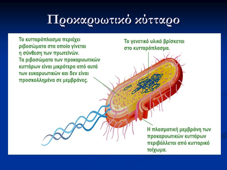 Ευκαρυωτικά - Προκαρυωτικά Κυτταρικό μέγεθος: μήκος 10-100μm μήκος 1-10μm Κυτταρόπλασμα: ο κυτταρικός σκελετός αποτελείται από πρωτεϊνικά ινίδια δεν υπάρχει κυτταρικός σκελετός Οργανίδια: πυρήνας, μιτοχόνδρια, χλωροπλάστες, ενδοπλασματικό δίκτυο κ.ά.