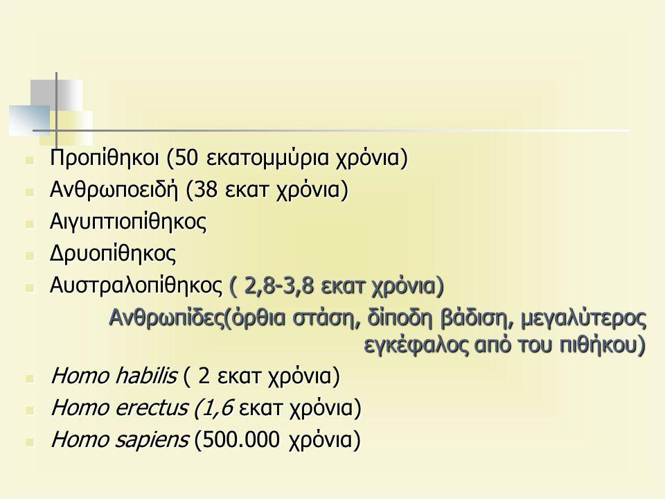 Προπίθηκοι (50 εκατομμύρια χρόνια) Προπίθηκοι (50 εκατομμύρια χρόνια) Ανθρωποειδή (38 εκατ χρόνια) Ανθρωποειδή (38 εκατ χρόνια) Αιγυπτιοπίθηκος Αιγυπτιοπίθηκος Δρυοπίθηκος Δρυοπίθηκος Αυστραλοπίθηκος ( 2,8-3,8 εκατ χρόνια) Αυστραλοπίθηκος ( 2,8-3,8 εκατ χρόνια) Ανθρωπίδες(όρθια στάση, δίποδη βάδιση, μεγαλύτερος εγκέφαλος από του πιθήκου) Homo habilis ( 2 εκατ χρόνια) Homo habilis ( 2 εκατ χρόνια) Homo erectus (1,6 εκατ χρόνια) Homo erectus (1,6 εκατ χρόνια) Homo sapiens (500.000 χρόνια) Homo sapiens (500.000 χρόνια)