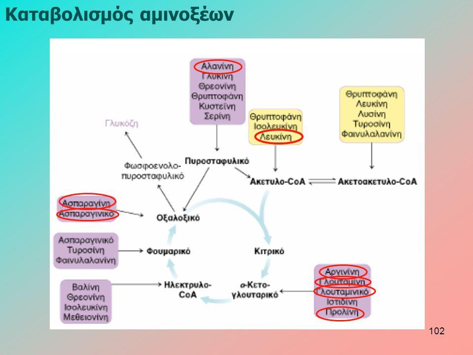 Καταβολισμός αμινοξέων 102