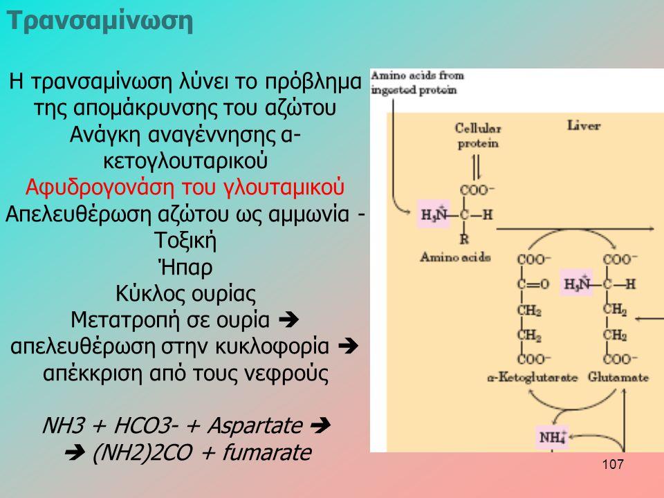 Η τρανσαμίνωση λύνει το πρόβλημα της απομάκρυνσης του αζώτου Ανάγκη αναγέννησης α- κετογλουταρικού Αφυδρογονάση του γλουταμικού Απελευθέρωση αζώτου ως αμμωνία - Τοξική Ήπαρ Κύκλος ουρίας Μετατροπή σε ουρία  απελευθέρωση στην κυκλοφορία  απέκκριση από τους νεφρούς NH3 + HCO3- + Aspartate   (NH2)2CO + fumarate Τρανσαμίνωση 107