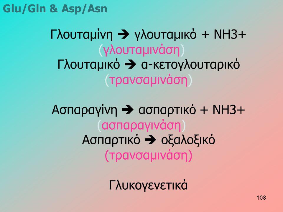 Γλουταμίνη  γλουταμικό + NH3+ (γλουταμινάση) Γλουταμικό  α-κετογλουταρικό (τρανσαμινάση) Ασπαραγίνη  ασπαρτικό + NH3+ (ασπαραγινάση) Ασπαρτικό  οξαλοξικό (τρανσαμινάση) Γλυκογενετικά Glu/Gln & Asp/Asn 108