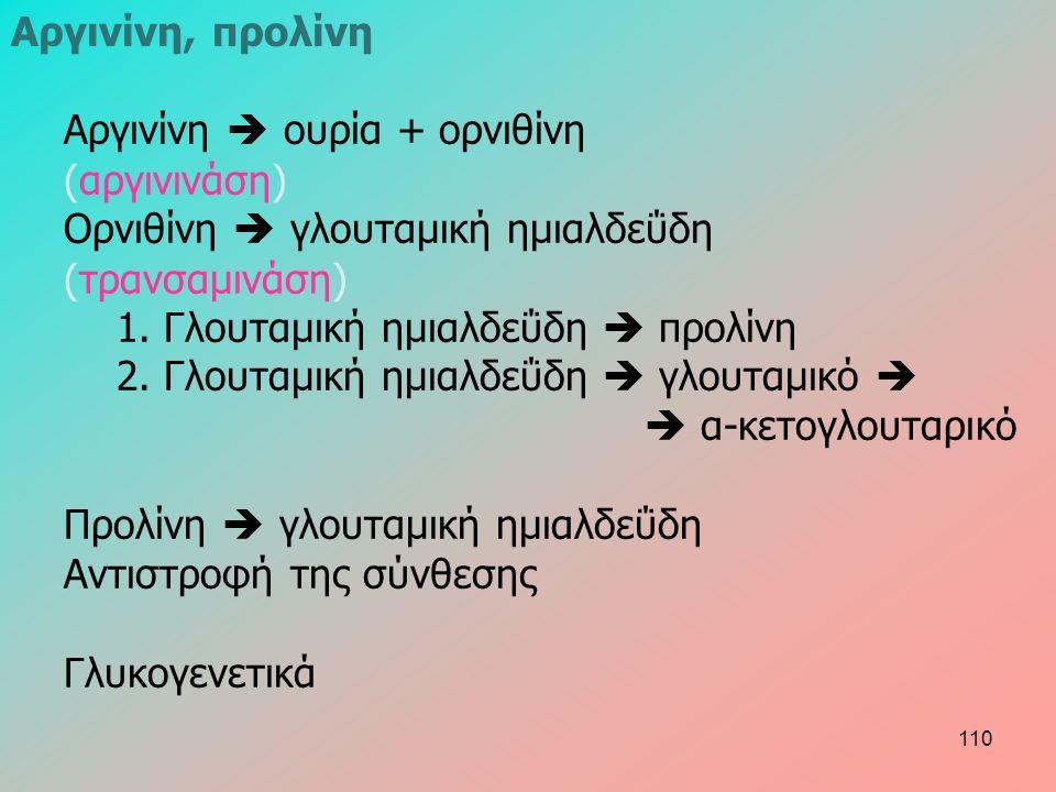 Αργινίνη  ουρία + ορνιθίνη (αργινινάση) Ορνιθίνη  γλουταμική ημιαλδεΰδη (τρανσαμινάση) 1. Γλουταμική ημιαλδεΰδη  προλίνη 2. Γλουταμική ημιαλδεΰδη 