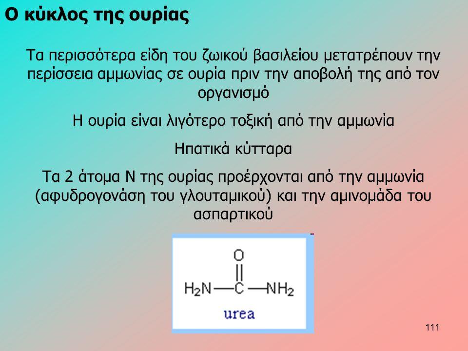 Ο κύκλος της ουρίας Τα περισσότερα είδη του ζωικού βασιλείου μετατρέπουν την περίσσεια αμμωνίας σε ουρία πριν την αποβολή της από τον οργανισμό Η ουρία είναι λιγότερο τοξική από την αμμωνία Ηπατικά κύτταρα Τα 2 άτομα Ν της ουρίας προέρχονται από την αμμωνία (αφυδρογονάση του γλουταμικού) και την αμινομάδα του ασπαρτικού 111