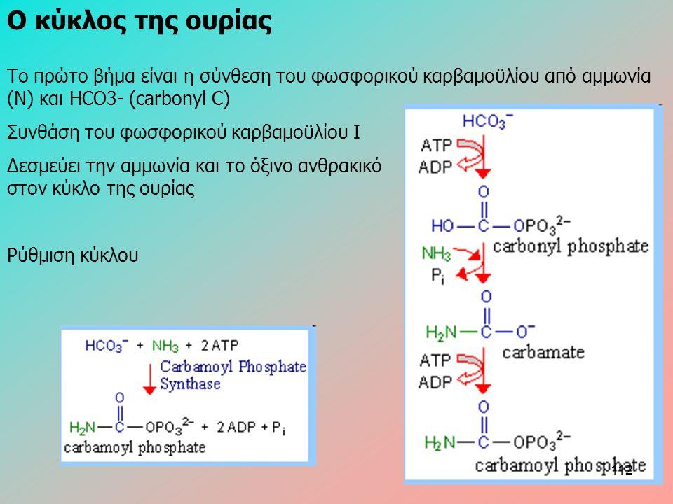 Ο κύκλος της ουρίας Το πρώτο βήμα είναι η σύνθεση του φωσφορικού καρβαμοϋλίου από αμμωνία (N) και HCO3- (carbonyl C) Συνθάση του φωσφορικού καρβαμοϋλί