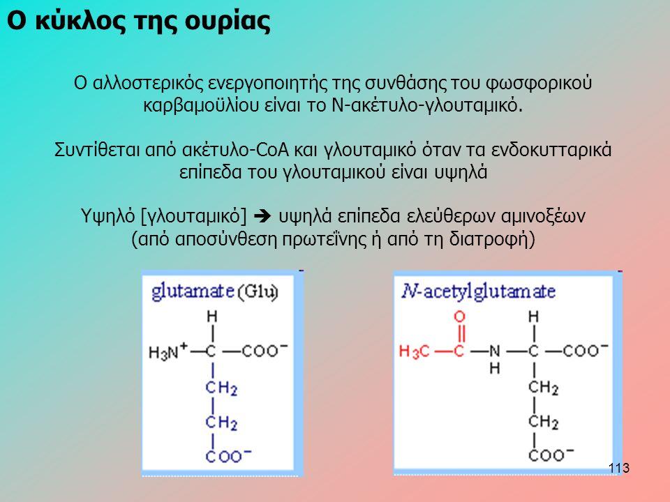 Ο κύκλος της ουρίας Ο αλλοστερικός ενεργοποιητής της συνθάσης του φωσφορικού καρβαμοϋλίου είναι το Ν-ακέτυλο-γλουταμικό.