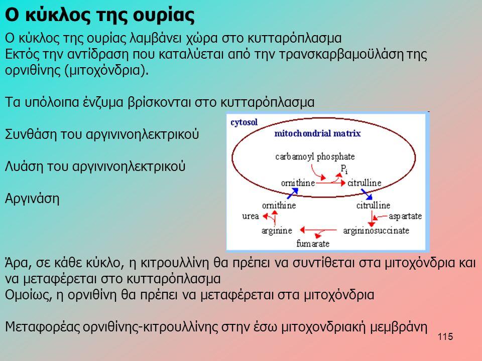 Ο κύκλος της ουρίας λαμβάνει χώρα στο κυτταρόπλασμα Eκτός την αντίδραση που καταλύεται από την τρανσκαρβαμοϋλάση της ορνιθίνης (μιτοχόνδρια). Τα υπόλο