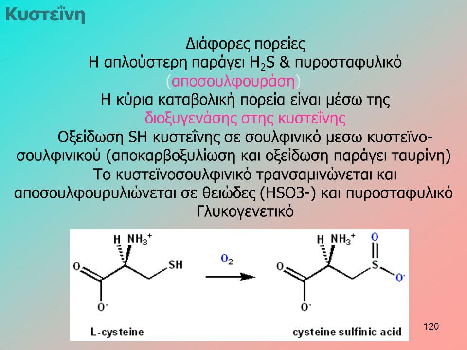 Διάφορες πορείες Η απλούστερη παράγει H 2 S & πυροσταφυλικό (αποσουλφουράση) Η κύρια καταβολική πορεία είναι μέσω της διοξυγενάσης στης κυστεΐνης Οξείδωση SH κυστεΐνης σε σουλφινικό μεσω κυστεϊνο- σουλφινικού (αποκαρβοξυλίωση και οξείδωση παράγει ταυρίνη) Το κυστεϊνοσουλφινικό τρανσαμινώνεται και αποσουλφουρυλιώνεται σε θειώδες (HSO3-) και πυροσταφυλικό Γλυκογενετικό Κυστεΐνη 120