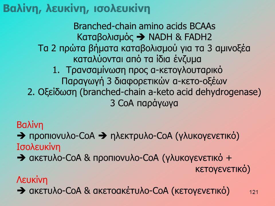 Βranched-chain amino acids BCAAs Καταβολισμός  NADH & FADH2 Τα 2 πρώτα βήματα καταβολισμού για τα 3 αμινοξέα καταλύονται από τα ίδια ένζυμα 1.Τρανσαμίνωση προς α-κετογλουταρικό Παραγωγή 3 διαφορετικών α-κετο-οξέων 2.