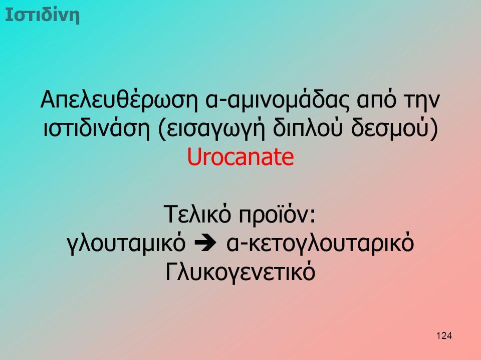 Ιστιδίνη Απελευθέρωση α-αμινομάδας από την ιστιδινάση (εισαγωγή διπλού δεσμού) Urocanate Τελικό προϊόν: γλουταμικό  α-κετογλουταρικό Γλυκογενετικό 124