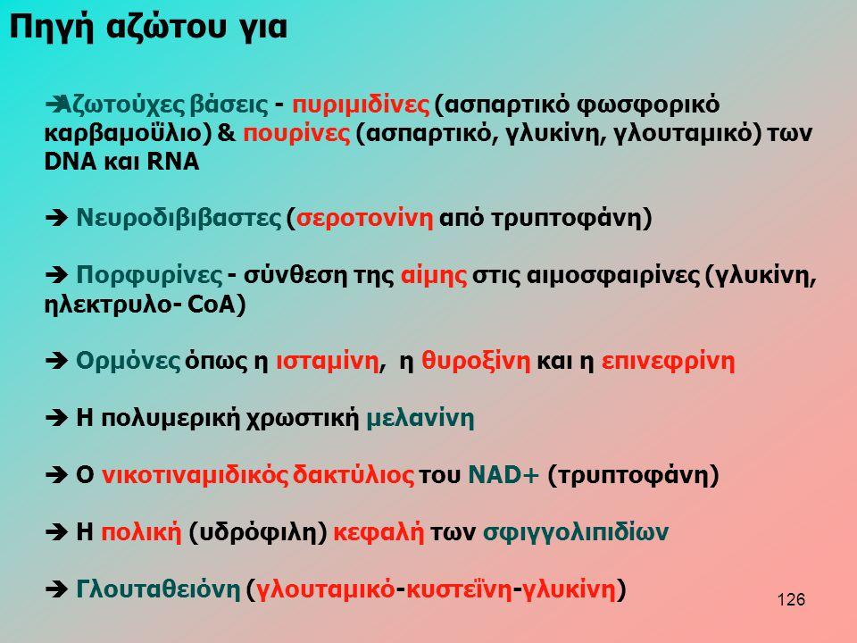  Aζωτούχες βάσεις - πυριμιδίνες (ασπαρτικό φωσφορικό καρβαμοΰλιο) & πουρίνες (ασπαρτικό, γλυκίνη, γλουταμικό) των DNA και RNA  Nευροδιβιβαστες (σεροτονίνη από τρυπτοφάνη)  Πορφυρίνες - σύνθεση της αίμης στις αιμοσφαιρίνες (γλυκίνη, ηλεκτρυλο- CoA)  Ορμόνες όπως η ισταμίνη, η θυροξίνη και η επινεφρίνη  Η πολυμερική χρωστική μελανίνη  Ο νικοτιναμιδικός δακτύλιος του NAD+ (τρυπτοφάνη)  Η πολική (υδρόφιλη) κεφαλή των σφιγγολιπιδίων  Γλουταθειόνη (γλουταμικό-κυστεΐνη-γλυκίνη) Πηγή αζώτου για 126