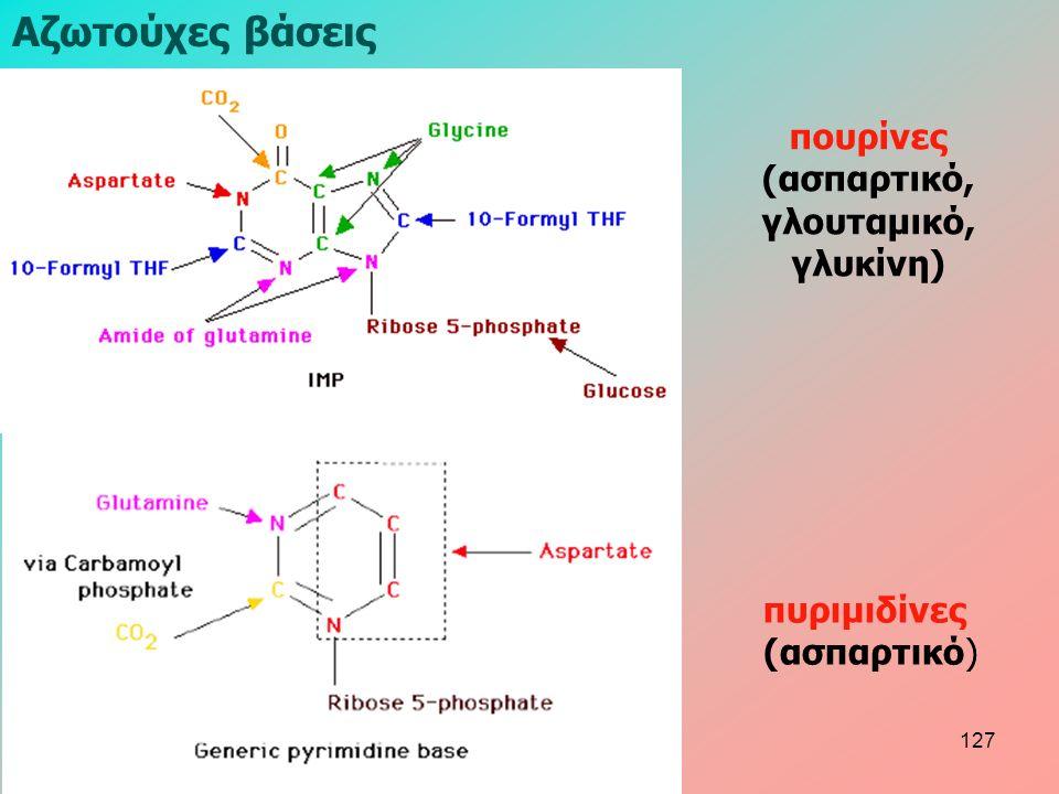πυριμιδίνες (ασπαρτικό) Aζωτούχες βάσεις πουρίνες (ασπαρτικό, γλουταμικό, γλυκίνη) 127