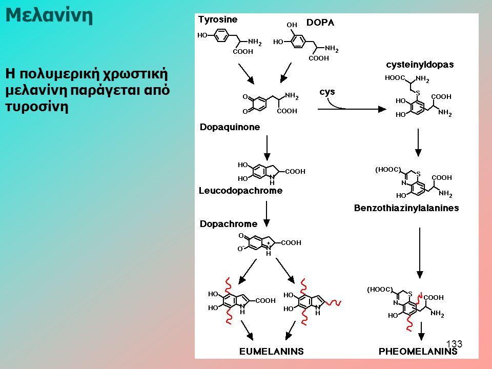 Η πολυμερική χρωστική μελανίνη παράγεται από τυροσίνη Μελανίνη 133