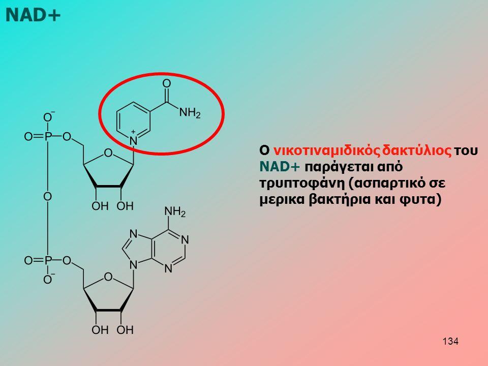 Ο νικοτιναμιδικός δακτύλιος του NAD+ παράγεται από τρυπτοφάνη (ασπαρτικό σε μερικα βακτήρια και φυτα) NAD+ 134