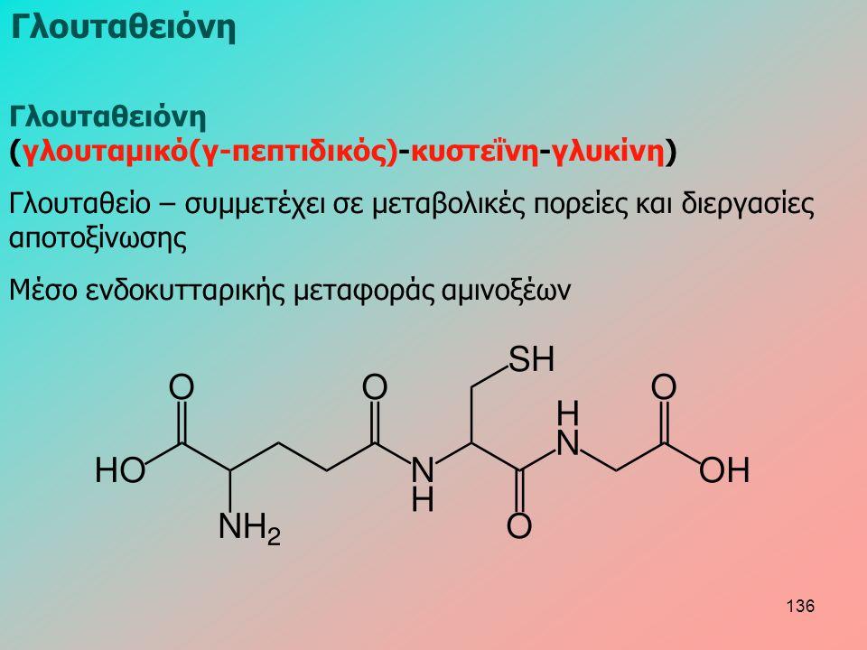 Γλουταθειόνη (γλουταμικό(γ-πεπτιδικός)-κυστεΐνη-γλυκίνη) Γλουταθείο – συμμετέχει σε μεταβολικές πορείες και διεργασίες αποτοξίνωσης Μέσο ενδοκυτταρικής μεταφοράς αμινοξέων Γλουταθειόνη 136