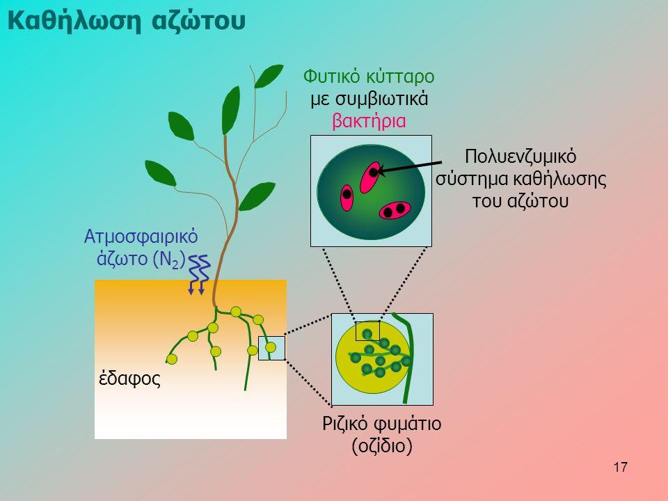 έδαφος Ατμοσφαιρικό άζωτο (Ν 2 ) Ριζικό φυμάτιο (οζίδιο) Φυτικό κύτταρο με συμβιωτικά βακτήρια Πολυενζυμικό σύστημα καθήλωσης του αζώτου Καθήλωση αζώτου 17