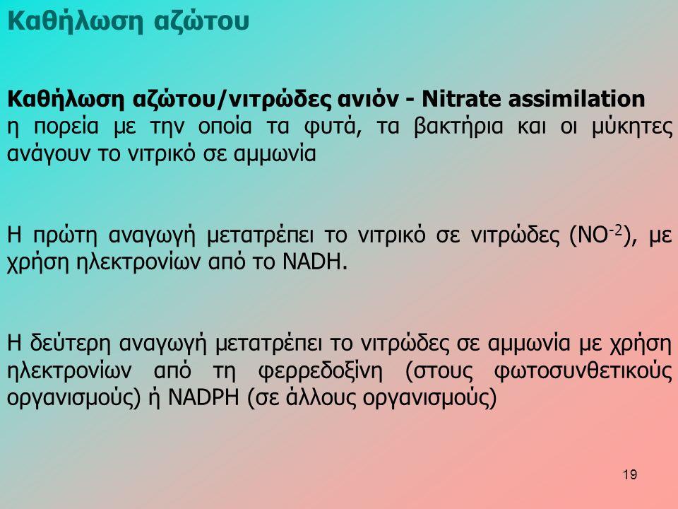Καθήλωση αζώτου/νιτρώδες ανιόν - Nitrate assimilation η πορεία με την οποία τα φυτά, τα βακτήρια και οι μύκητες ανάγουν το νιτρικό σε αμμωνία Η πρώτη αναγωγή μετατρέπει το νιτρικό σε νιτρώδες (NO -2 ), με χρήση ηλεκτρονίων από το NADH.