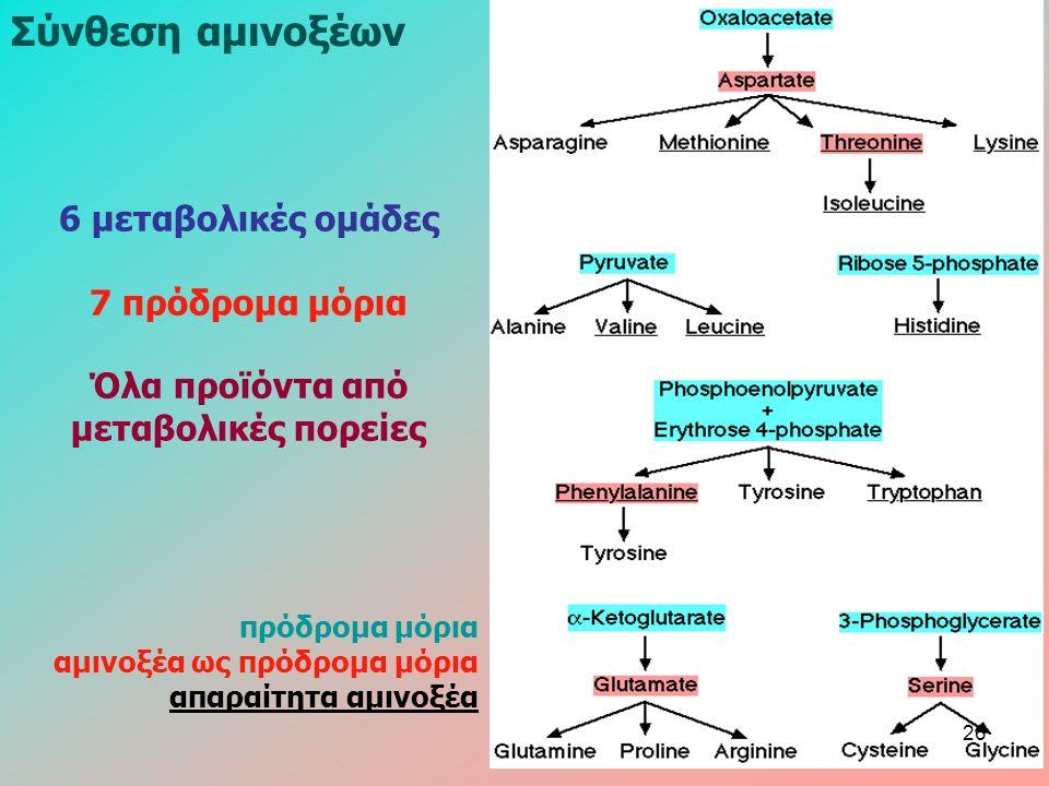 Σύνθεση αμινοξέων 6 μεταβολικές ομάδες 7 πρόδρομα μόρια Όλα προϊόντα από μεταβολικές πορείες πρόδρομα μόρια αμινοξέα ως πρόδρομα μόρια απαραίτητα αμινοξέα 26