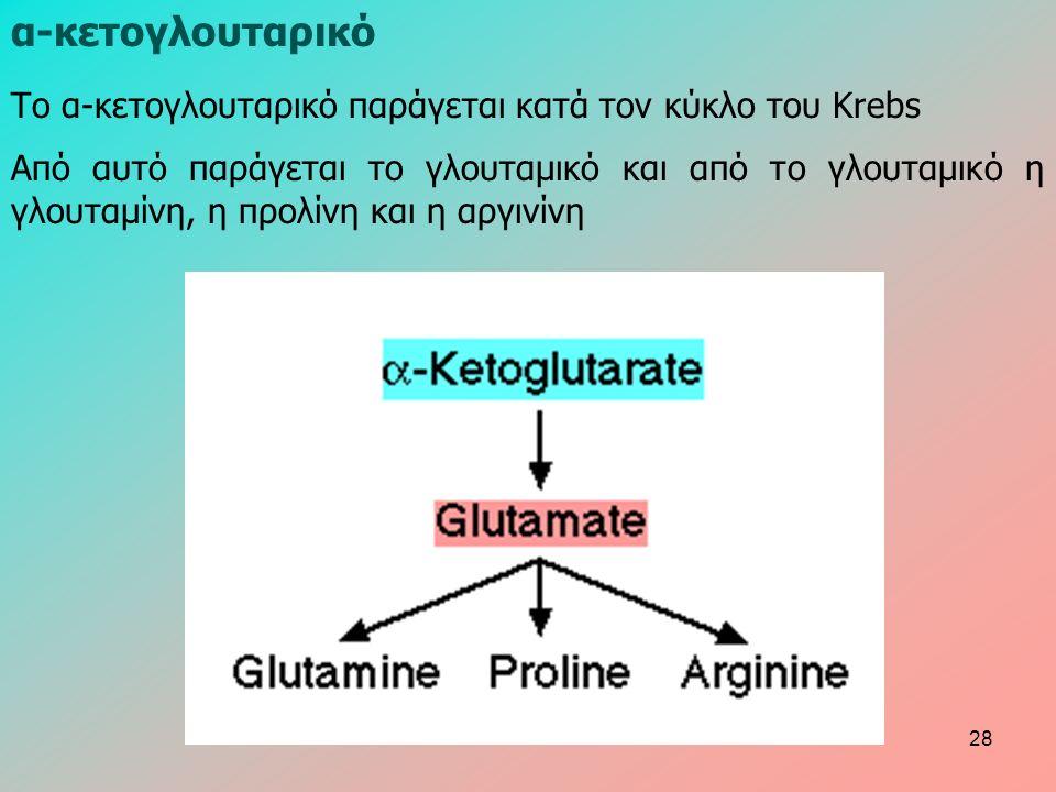 α-κετογλουταρικό Το α-κετογλουταρικό παράγεται κατά τον κύκλο του Krebs Από αυτό παράγεται το γλουταμικό και από το γλουταμικό η γλουταμίνη, η προλίνη και η αργινίνη 28