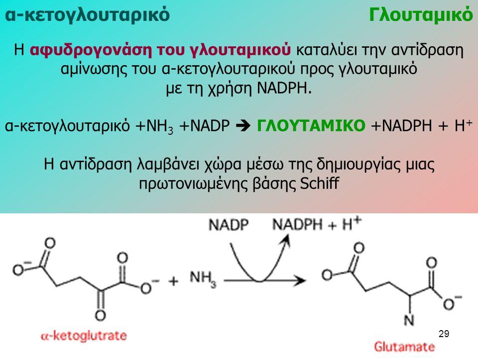 Η αφυδρογονάση του γλουταμικού καταλύει την αντίδραση αμίνωσης του α-κετογλουταρικού προς γλουταμικό με τη χρήση NADPH.